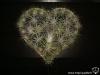 Coeur de Tillandsia
