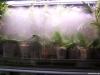 Grand terrarium brume