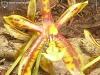 Phalaenopsis mannii labelle
