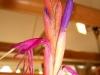 Tillandsia baileyi fleur