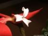 Tillandsia dyeriana fleur