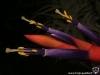 Tillandsia harrisii spécimen #1 fleur