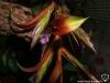 Tillandsia leiboldiana fleur