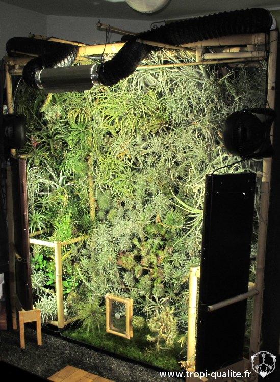 Cadre végétal géant, 2 ans plus tard (avec quelques modifications)