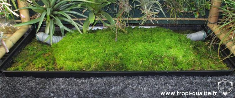 comment cultiver facilement de la sphaigne - tropi'qualité