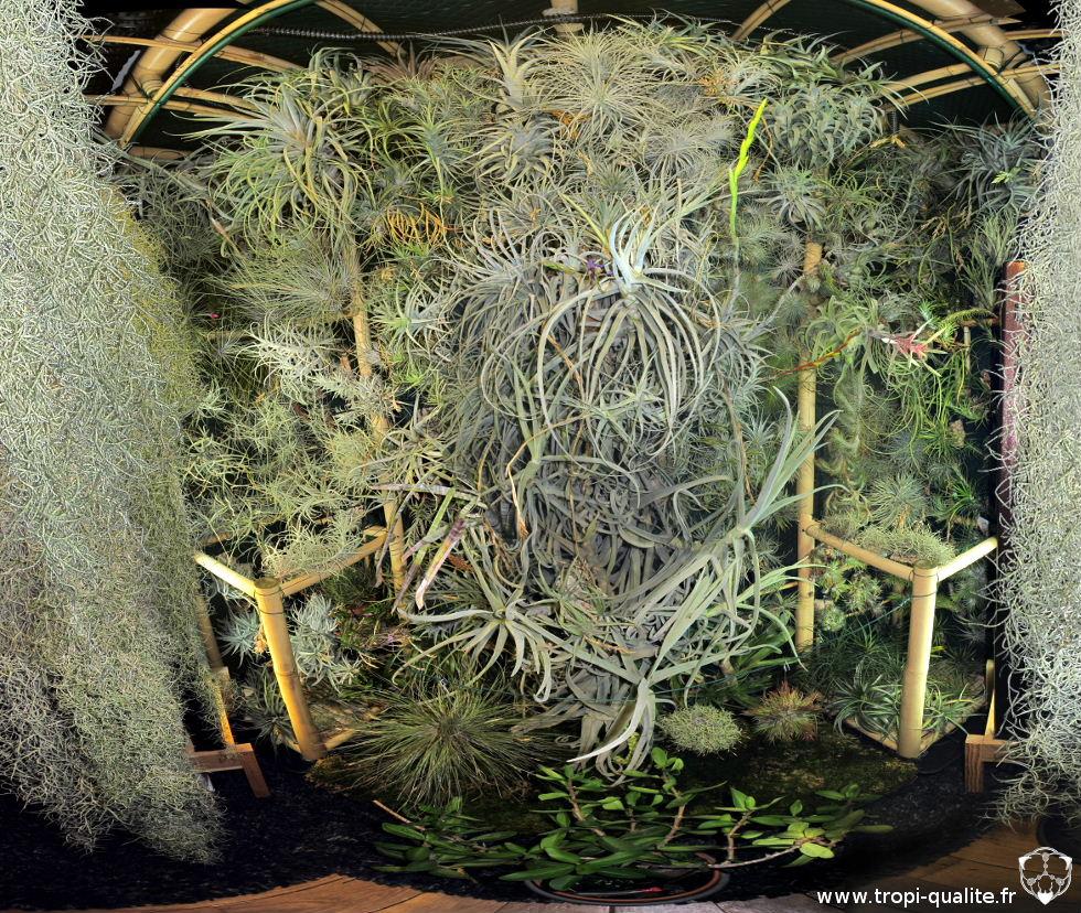 Cadre végétal géant, 3 ans plus tard (vision panoramique)